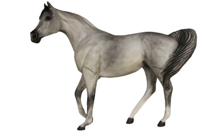 Dapple Gray Arabian